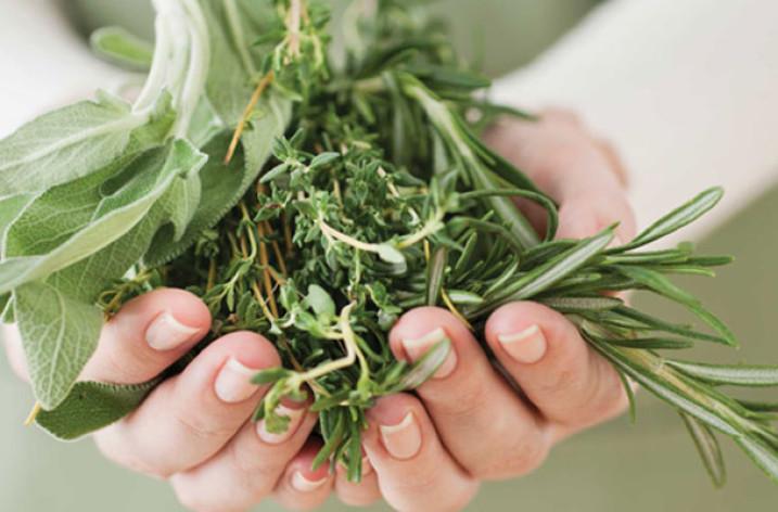 Какие растения повышают, а какие — понижают  давление?