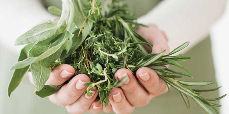 растения понижающие холестерин в крови