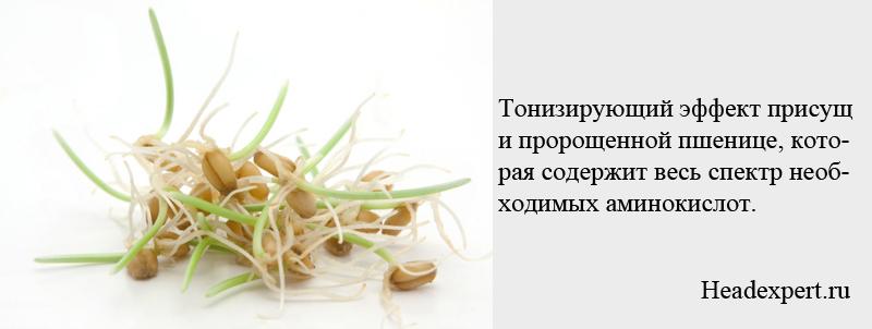 Пророщенная пшеница очень важный продукт в питании