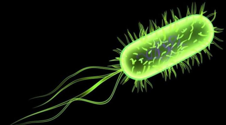 Вирусный менингит: симптомы, причины, лечение