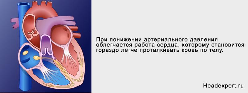 Снижение давления облегчает работу сердца