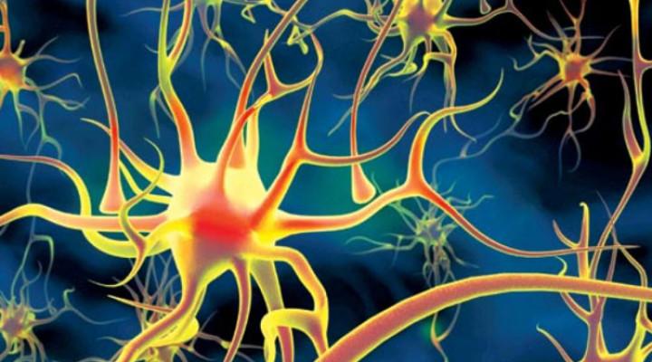 Атрофия головного мозга: последствия, прогноз для жизни