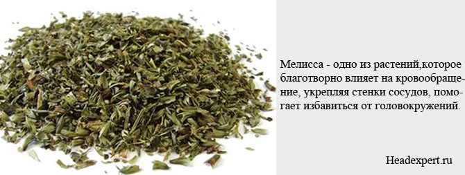 Мелисса - одно из растений, улучшающее мозговое кровообращение